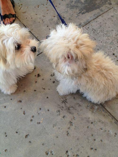 shaggy dogs dogs shaggy