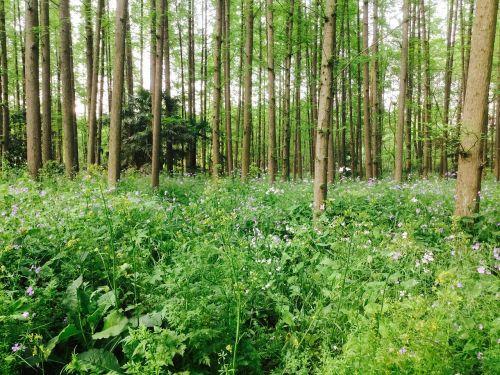 shanghai yangpu total green national forest park