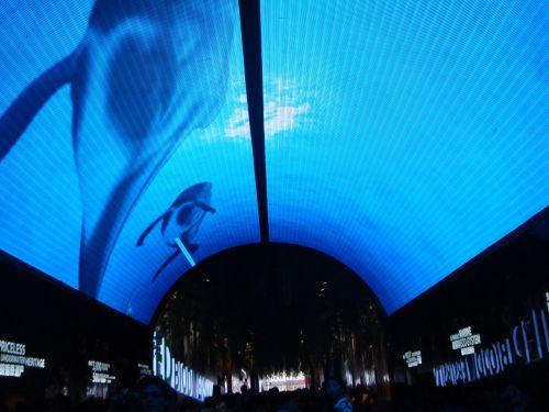 Shanghai World Expo 11