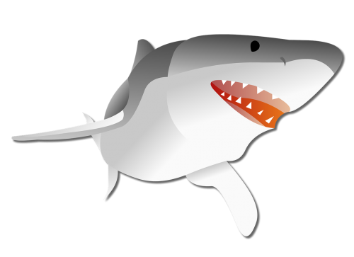 shark graphic predator