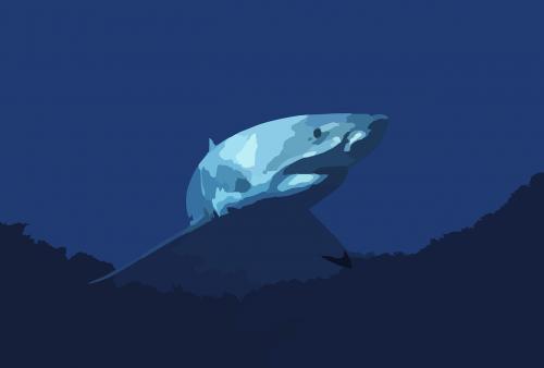 shark fish animal
