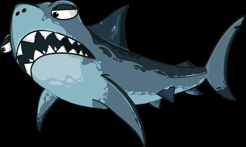 shark  predator  jaw