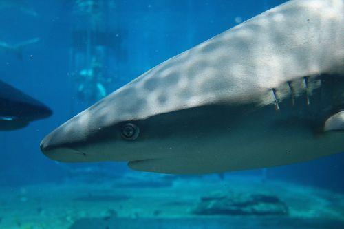 Shark At Ushaka Marine World 2