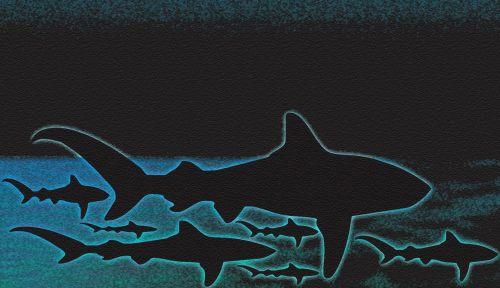 Shark Dangerous Scary