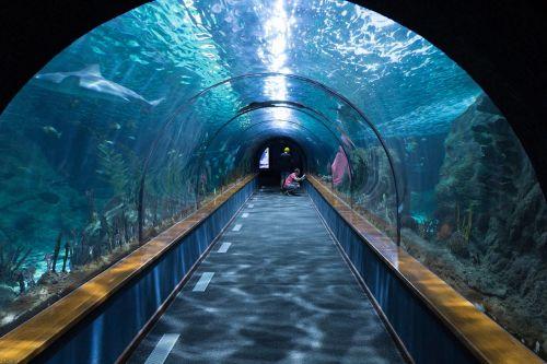 shark tunnel aquarium loropark