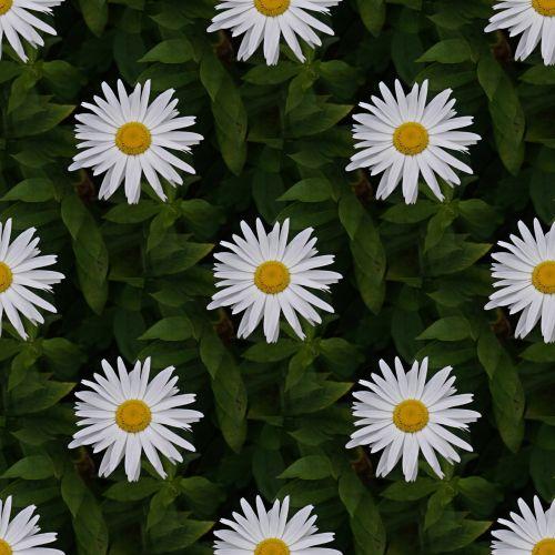 Shasta Daisy Seamless Tile