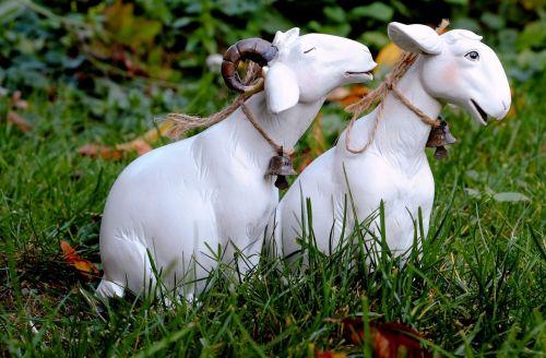 sheep affection luck