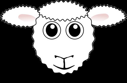 sheep farm animal agriculture
