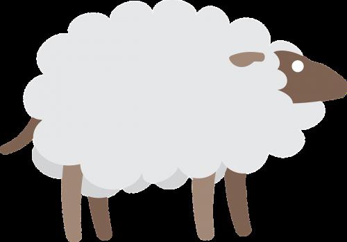 sheep goat animal