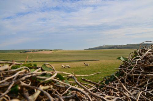 sheep lighthouse countryside