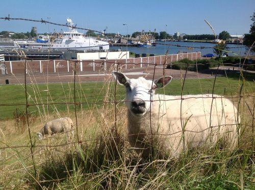 sheep boulevard shipyard