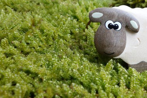 sheep moss meadow