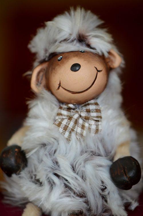 sheep funny cute
