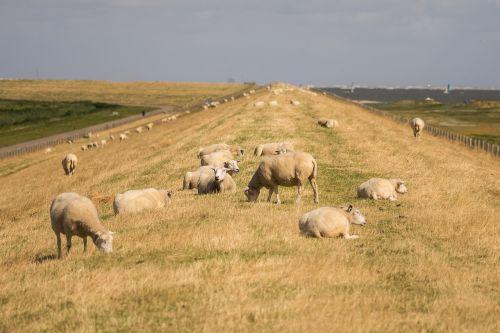 sheeps dike sky
