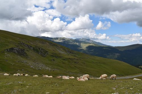 sheeps mountain pasture