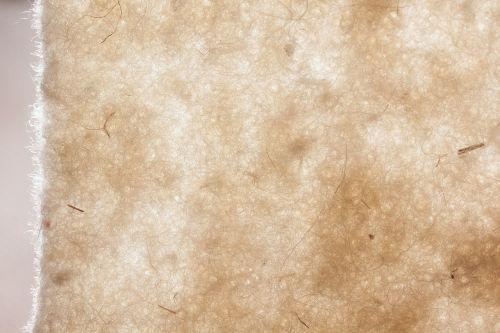 sheep's wool sheep wool-felt natural fiber