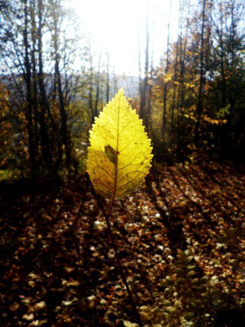 sheet beam nature