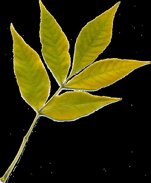 sheet autumn leaf yellow leaves