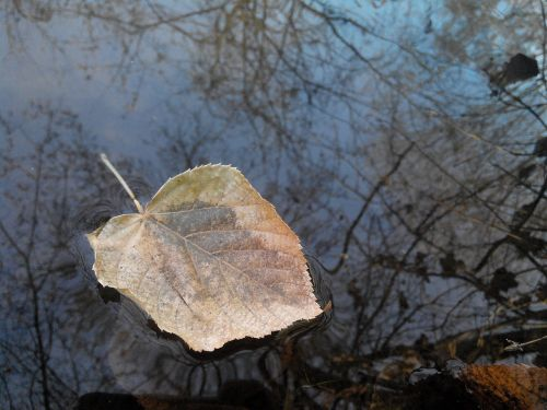 sheet river autumn