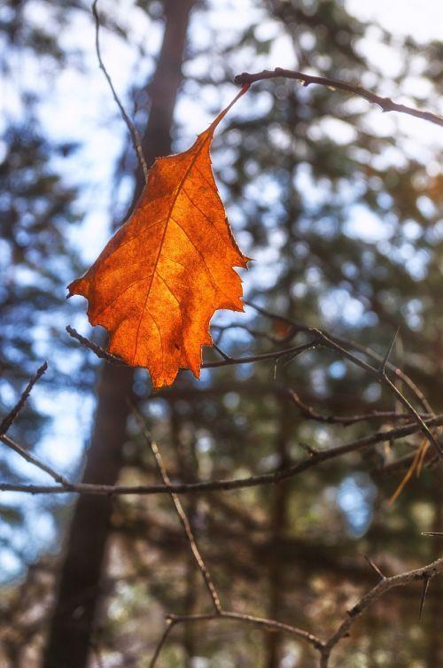 sheet autumn leaves