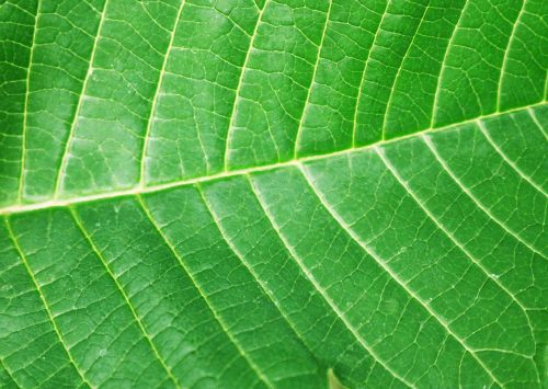 sheet a green leaf structure