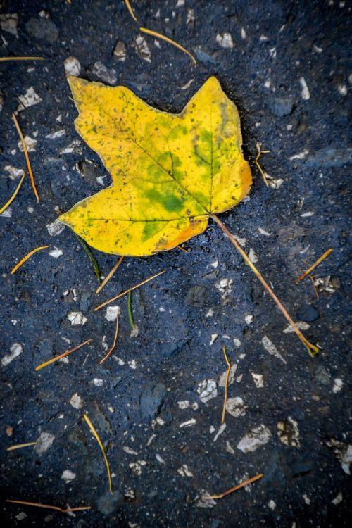 sheet autumn nature