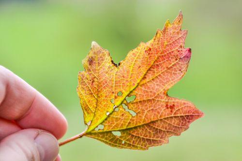 sheet hand autumn