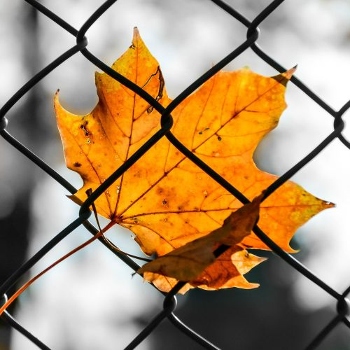 sheet autumn colored
