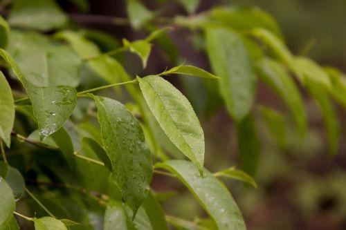 sheet green leaves