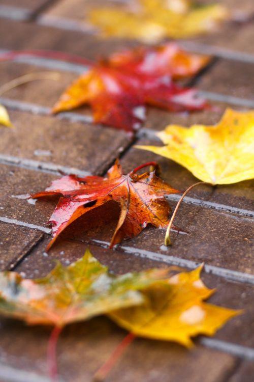 sheet autumn wet sheet