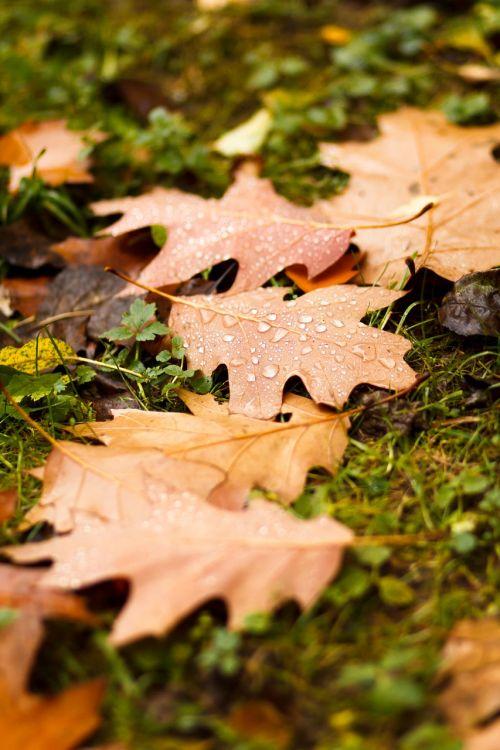 sheet autumn listopad