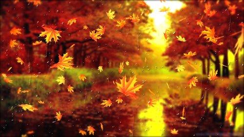 sheet  listopad  autumn