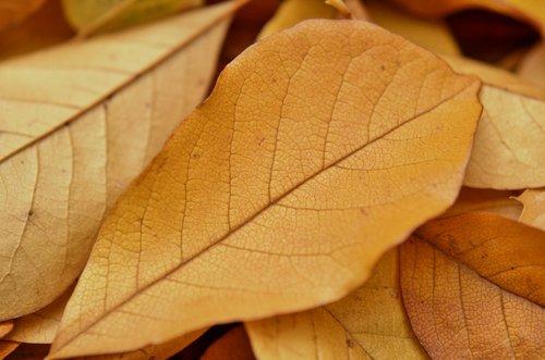 sheet  yellow autumn  foliage