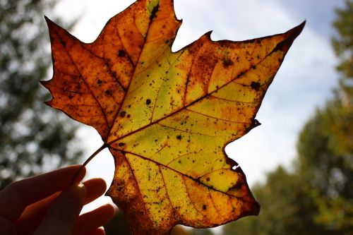 sheet yellow autumn