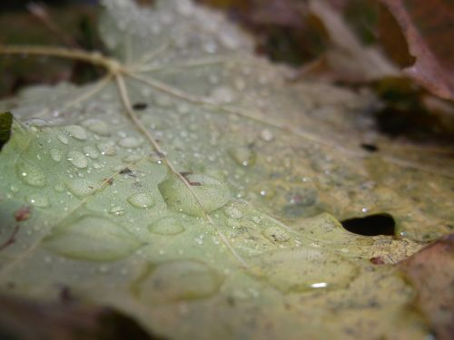 sheet autumn drops