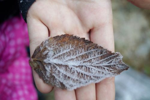 sheet autumn icing