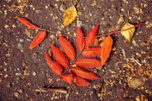 autumn listopad leaves