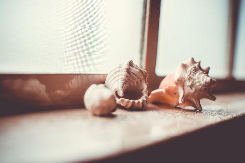 shelf collection shells