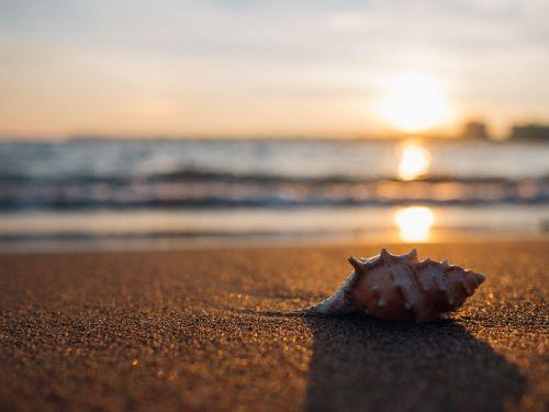 shell beach seaside