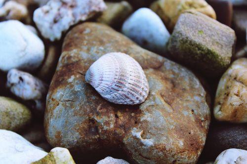 lukštas,akmenys,gamta,surinkti,žemė