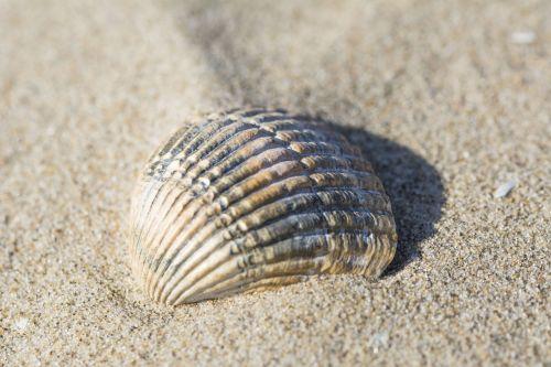 shell beach sand