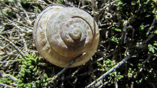 shell snail nature