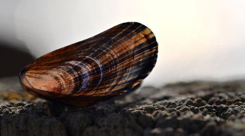 shell beach summer