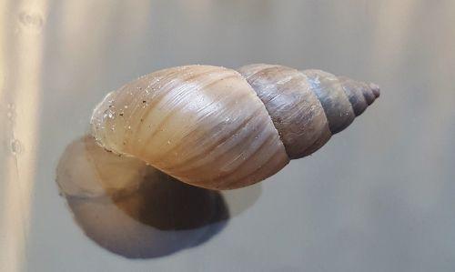 shell snail mollusk