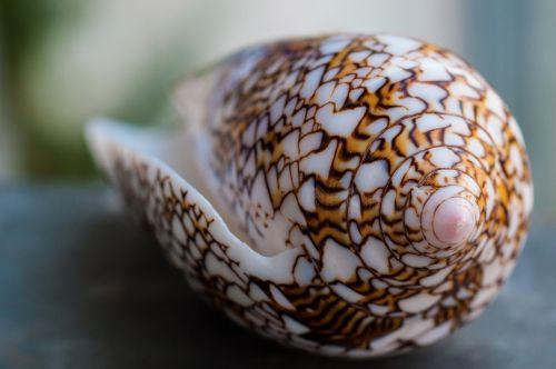 shell seychelles summer