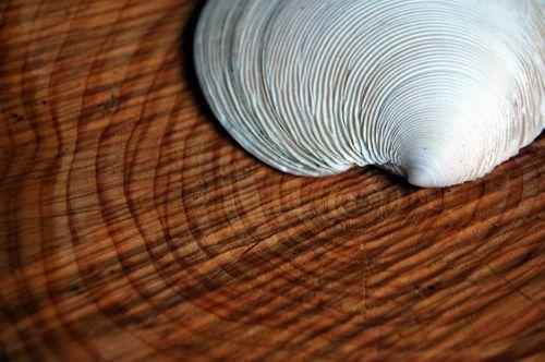 shell tree rings