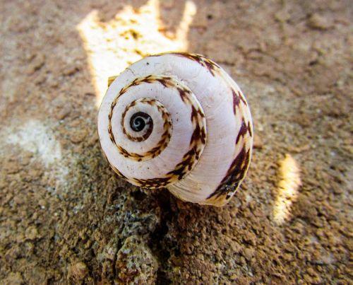 shell helix spiral