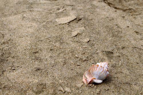 shell sand beach