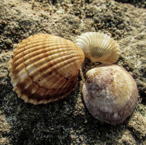 shell beach nature