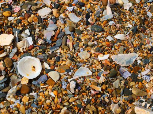 shell sand beach stone